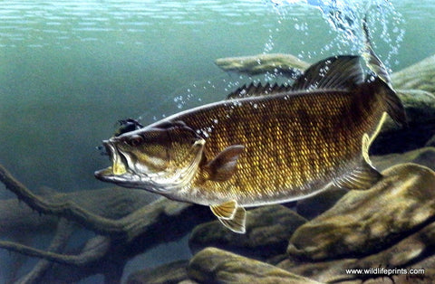 Al Agnew Smallmouth Bass Fishing Art Print