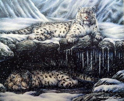 Bill Adair Picture of Snow Leopards