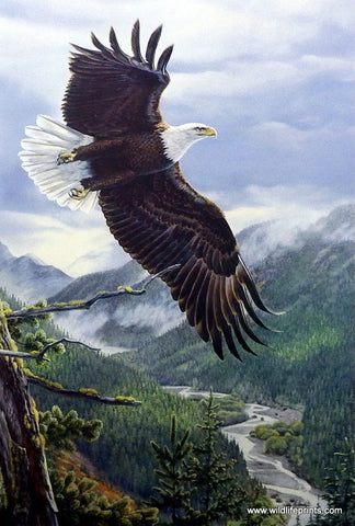 Al Agnew Eagle Birds of Prey Art Print