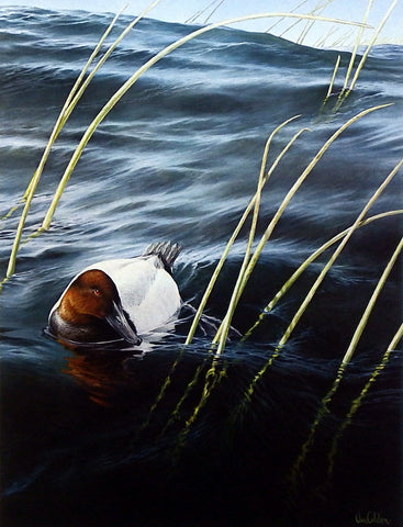 Ron Van Gilder Solitude- Canvasback