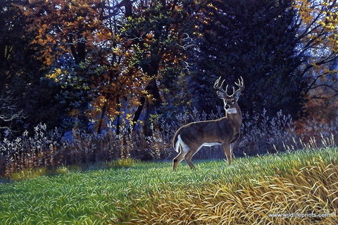 Al Agnew Whitetail Deer Wildlife Art Print