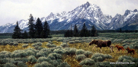 Jan McGuire Summer in the Tetons