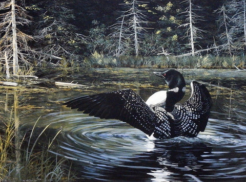 Andrew Kiss Loon Art Print Sunlit