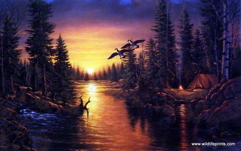 Derk Hansen print Canadian geese at sunset