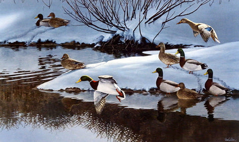 Ron Van Gilder The Gathering- Mallards