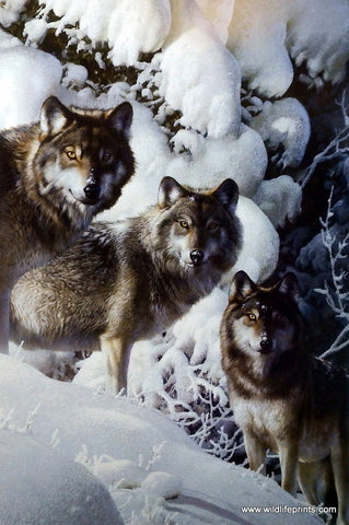 Carl Brenders Print of Wolf Pack in Winter