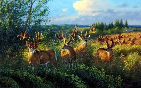 Michael Sieve The Reunion- Whitetail Deer