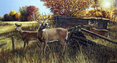 Ron Van Gilder The Waiting Game- Whitetail Deer