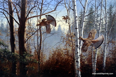 David Maass Three Birds Up-Ruffed Grouse