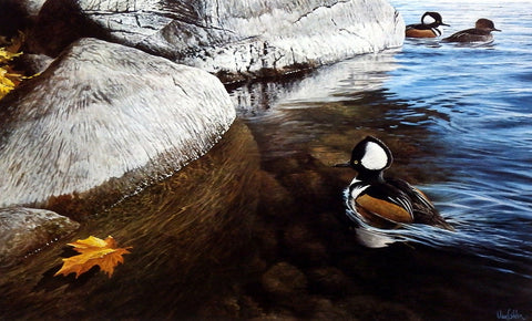 Ron Van Gilder Through the Shallows- Merganser Ducks