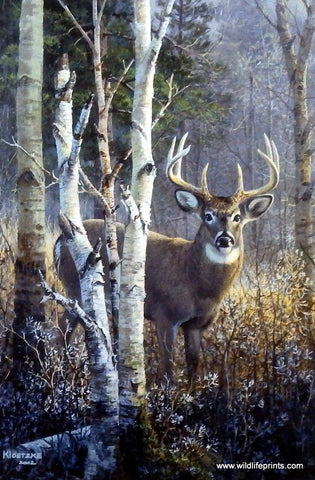 Don Kloetzke Whitetail Deer buck print