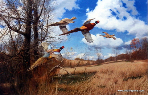 David Maass Tomahawk Trail- Pheasants