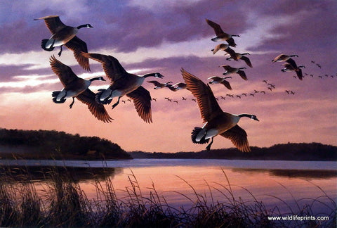David Maass Twilight-Canada Geese