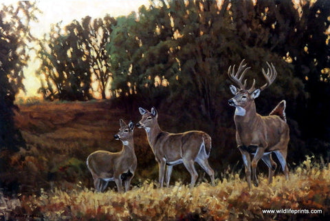 Nature artist Bruce Miller wildlife whitetail deer print