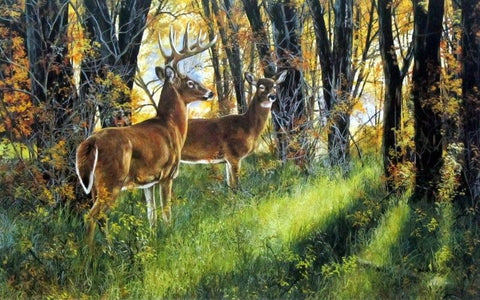 Andrew Kiss Whitetail Deer Print Undercover