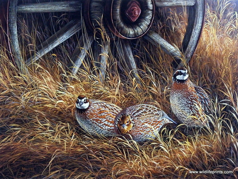 Rosemary Millette Wagon Wheel Bobwhites