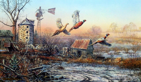Scott Zoellick Where Pheasants are Forever