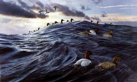 Ron Van Gilder Windward- Canvasback Ducks