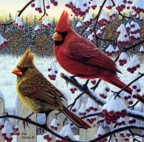 Kim Norlien Winter Cardinals