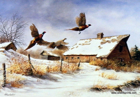 Richard Plasschaert Winter Flight