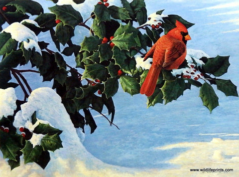 Michael Budden Winter Holly- Cardinal