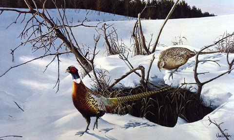 Ron Van Gilder Winter Shadows- Ringneck Pheasants