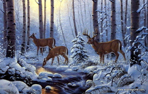 Derk Hansen Whitetail Deer Art Print