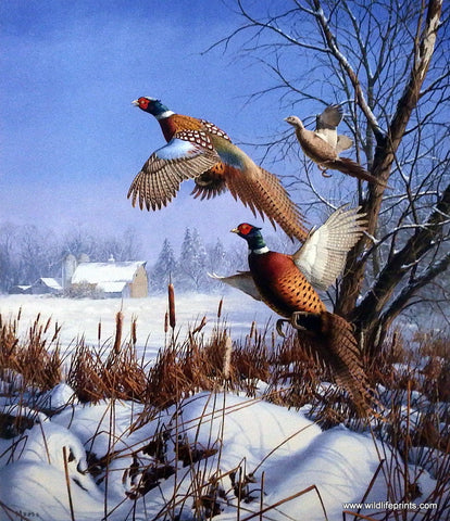 David Maass Winter Wonder-Pheasants
