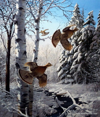 David Maass Wonder Winter Wonder-Ruffed Grouse