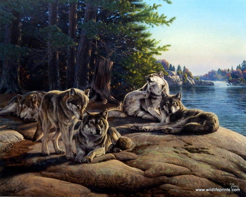 WOLF ART PRINT One to One detail by Carl Brenders Wildlife Wolves Poster 24x18