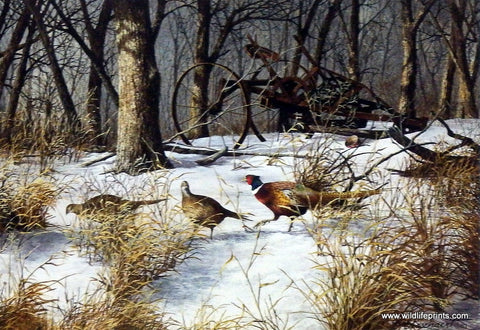 Richard Plasschaert Woodlot Feeding Pheasants