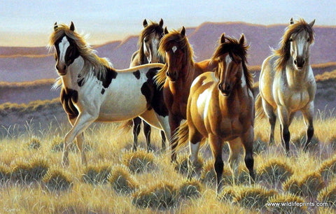 Cynthie Fisher Wild Horses Picture YOUNG BLOODS