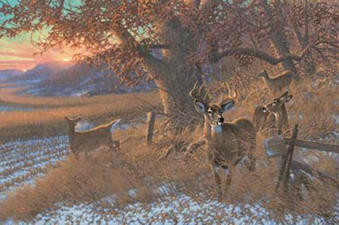 Michael Sieve Down from the Ridge Deer S/N Canvas