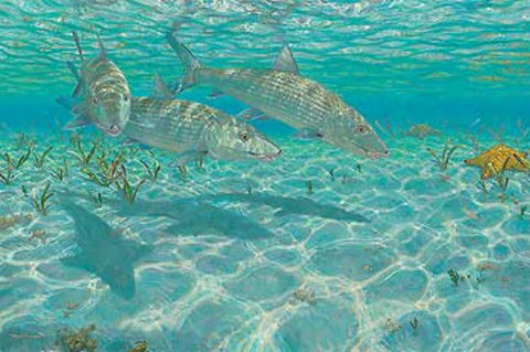 Mark Susinno Ghosts-Bonefish S/N Art Print