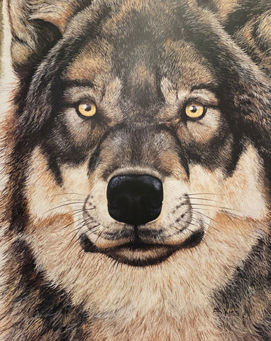 Andrew Kiss Intensity Wolf Art Print 24 x 30