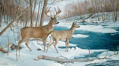 Ron Van Guilder The Jordan Buck S/N Deer Art Print