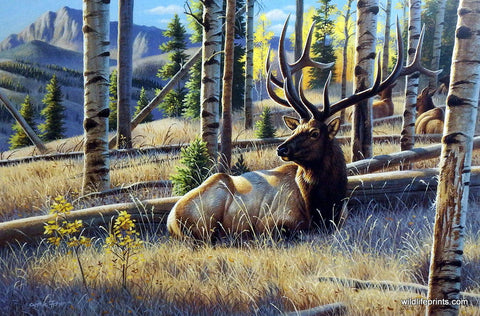 Cynthie Fisher Elk Picture Morning View