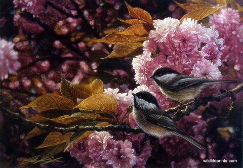 Collin Bogle Chickadees Picture with Pink Flowers