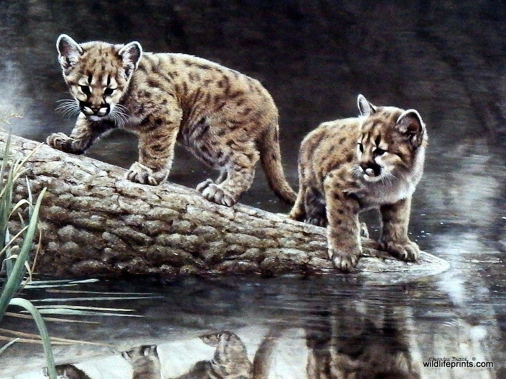 Wildlfie Artist Charles Frace Cougar Cub Art Print Reflections Wildlifeprints Com Submitted 1 day ago by automoderatorrobot. wildlifeprints com