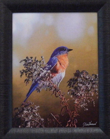 Jim Hansel Eastern Bluebird Art Print-Framed 15 x 19
