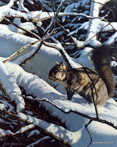 Brian Jarvi Squirrel Art Print Winter Playground