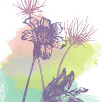 Pasque Flowers Screen Print