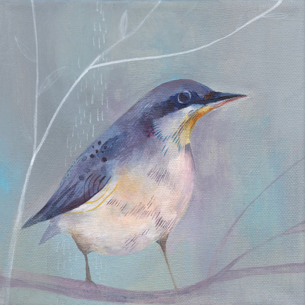 Nuthatch on Grey Greetings Card