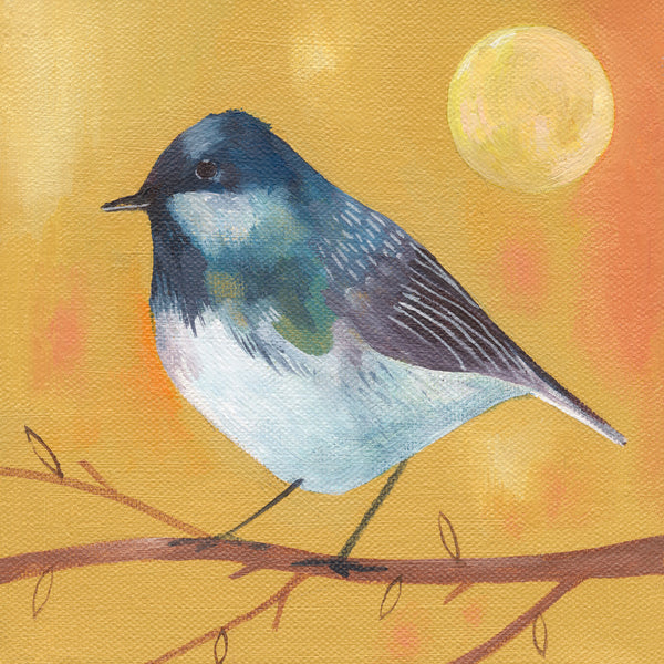 Coal Tit and Warm Sun Greetings Card