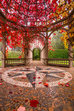 Load image into Gallery viewer, Autumn Colour Hamilton Gardens