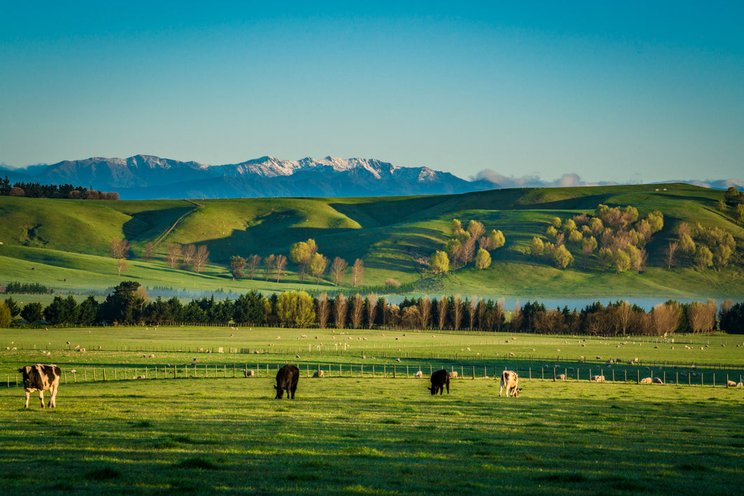 Golden Wairarapa Fields