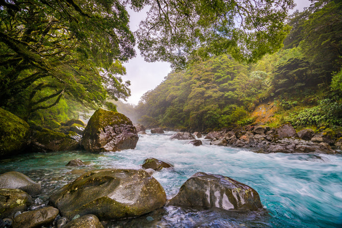 Hollyford River Fiordland Flow