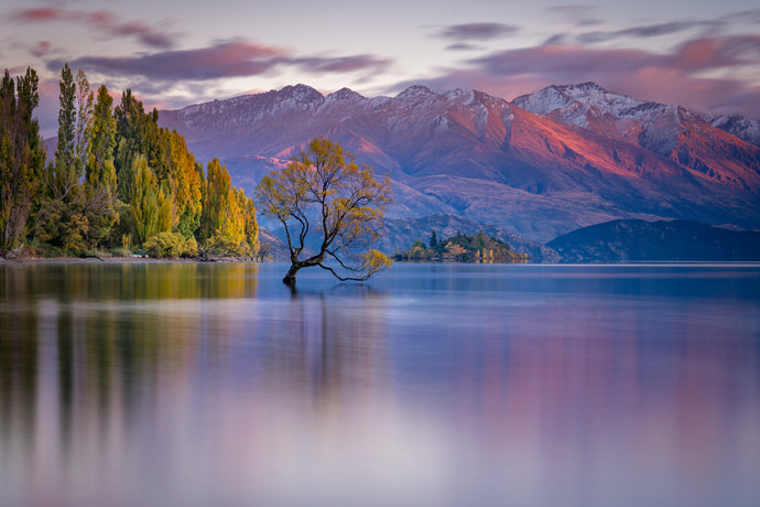 Wanaka Tree First Light