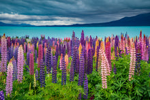 Load image into Gallery viewer, Lupins Moody Skies Pukaki