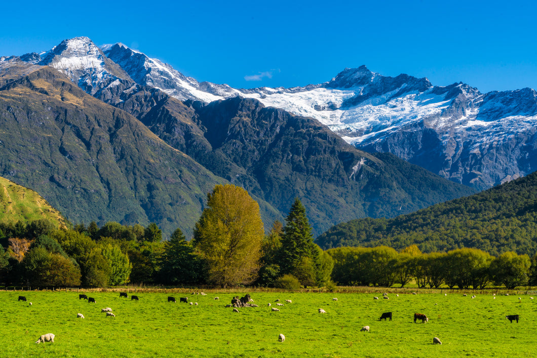 Classic NZ Matukituki Valley
